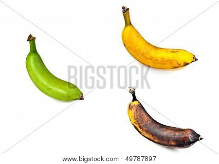 Plantain - Three Stages of Ripeness