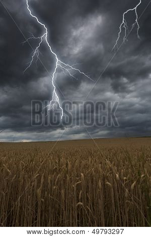 Flash lightning over a barley field