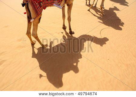 Shadows of camels in Arabian Desert, Dubai, United Arab Emirates