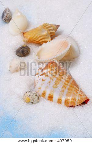 Little Group Of Seashells