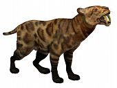 pic of saber-toothed  - Smilodon Cat lived in North America from the Eocene to Pleistocene Period and preyed on many large animals - JPG