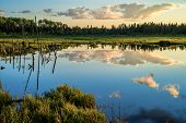 Tranquil Pond, Boreal Forest, Sunset