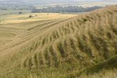 picture of creeping  - Rolling countryside with grassy hillside showing soil creep at Morgans Hill near Calne - JPG