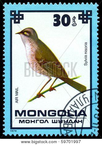 Vintage  Postage Stamp. Hawk Warbler.
