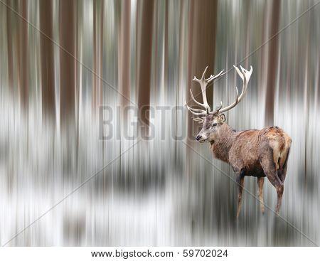 Artistic image of a deer in winter landscape