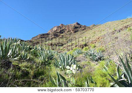 Volcanic Landscape on La Gomera