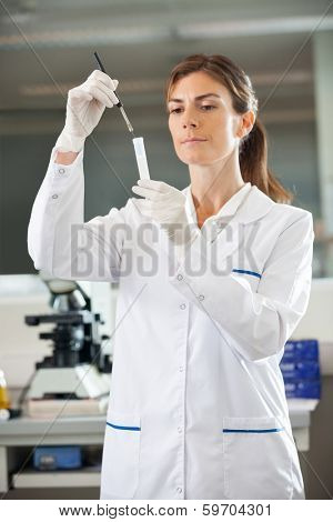 Female scientist analyzing test tube in medical lab