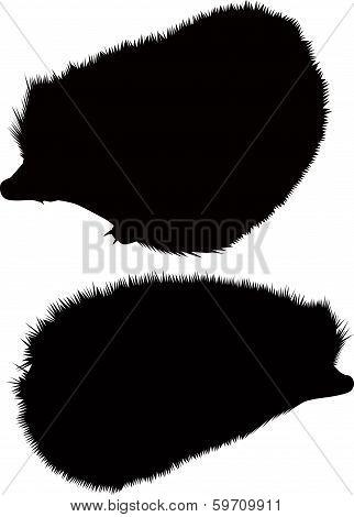 hedgehog animal isolated