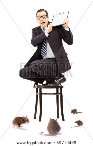Terrified businessman standing on chair defending himself from rat invasion isolated on white background