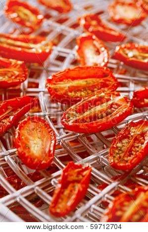 sundried cherry tomatoes on food dehydrator tray, shallow dog