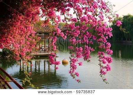 Flowers in Chinese park.