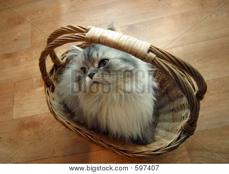 Cat In A Basket - 2