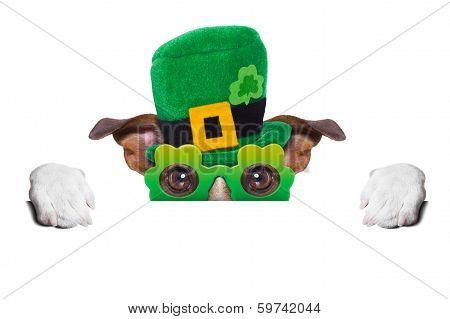 St Patricks  Day Dog
