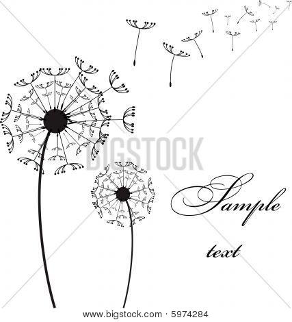 Vector Two Dandelion