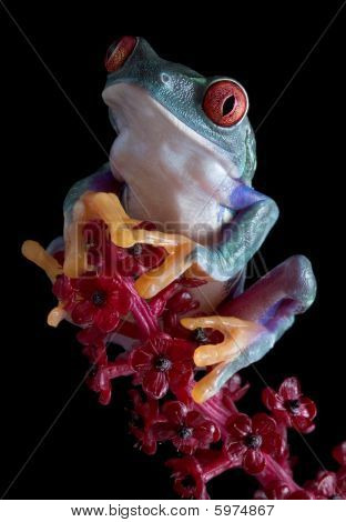 Tree Frog After Dark