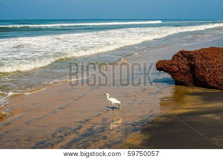 Beautiful Landscape Of The Coast With A White Bird Of Varkala. India, Kerala