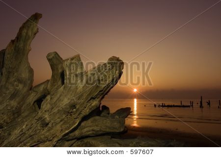 Driftwood And Rising Sun