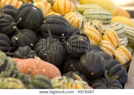 Black Acorn Squash