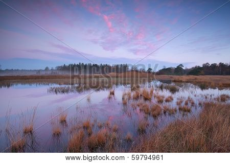 Pink Autumn Sunrise Over Forest Swamp
