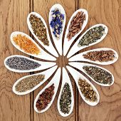 foto of wicca  - Medicinal herb selection also used in witches magical potions in white porcelain bowls over oak wood background - JPG