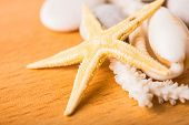pic of cockle shell  - starfish white coral shell on wood background - JPG