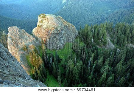 Pacific Northwest Douglas Fir trees