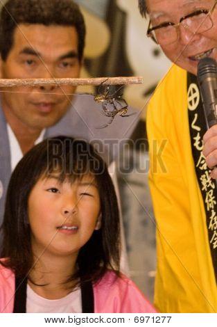 Uma jovem atuando como árbitro assistindo luta duas aranhas