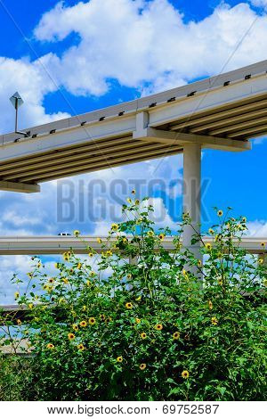 skyward view of an elevated highway system