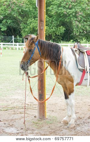 Horse In Farm.