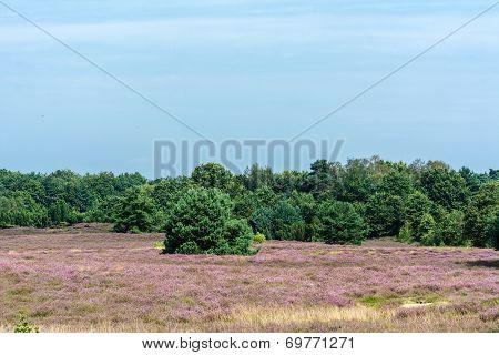 Nature protect area