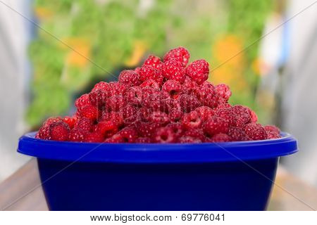 Cup Of Ripe Raspberry