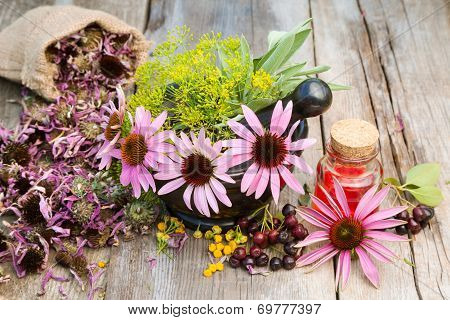 Coneflowers And Dill In Mortar, Vial With Essential Oil On Wooden Plank