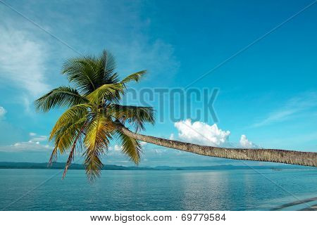 Coconut palm on tropical island beach