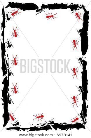 Ants Frame Background