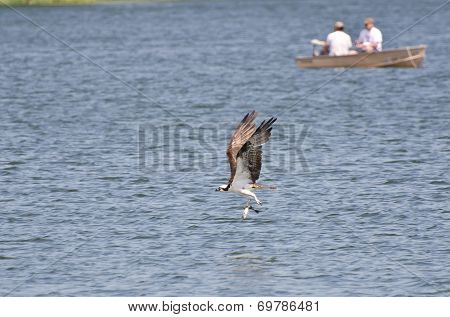 Osprey Carrying A Caught Fish Past Two Fishermen