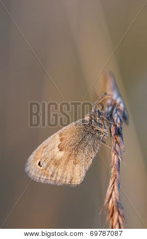 Small Butterfly On A Hay Straw