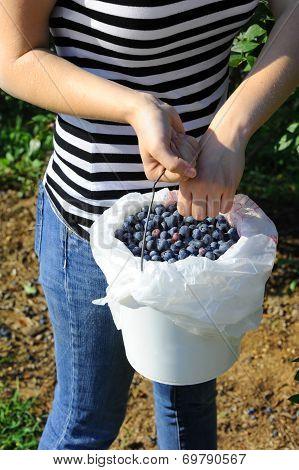 Basket Full Of Berries
