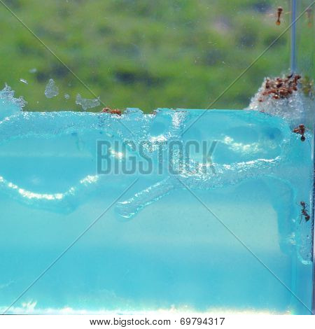 Ant Farm with clear gel to see ants
