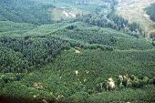 image of mudslide  - Patches of logging activity dot the Douglas Fir forests of western Washington state - JPG