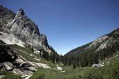 foto of sequoia-trees  - Sequoia National Park - JPG