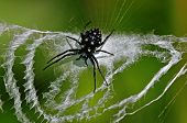 stock photo of spider web  - small orb - JPG