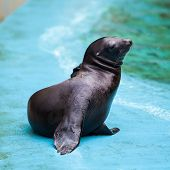 stock photo of sea lion  - Sea Lion. Seal. Sea Lion.  Seal .