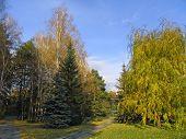 Siberian Autumn poster