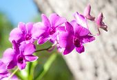 stock photo of orquidea  - the beautyful  purple orchid flower in garden - JPG