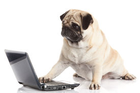 foto of working-dogs  - Pug Dog with laptop - JPG