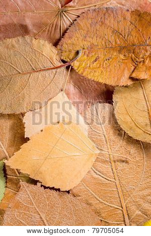 Background Of Leaves