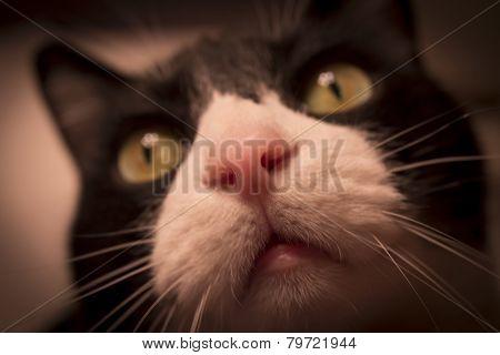 Pink Cat Nose