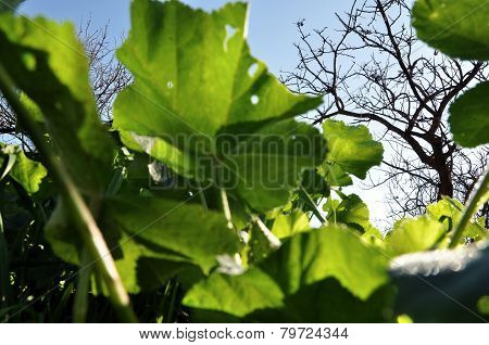 Green Leaves With Holes