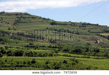 Grape vineyards on a terraced hill
