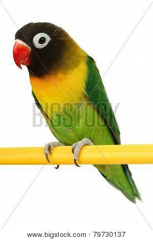 Beautiful Green Parrot